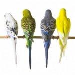 Bốn sắc màu tạo nên một kế hoạch Marketing